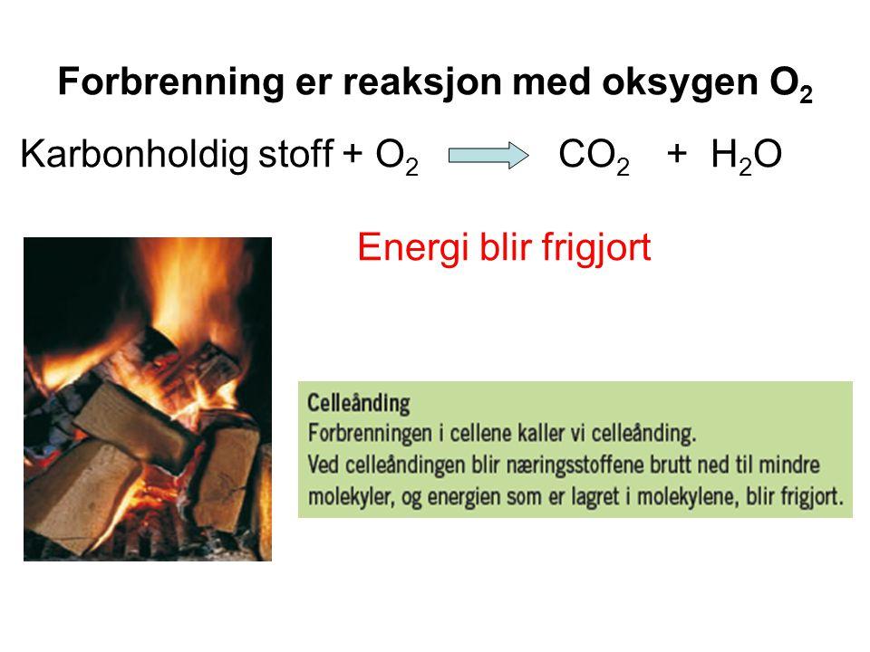 Forbrenning er reaksjon med oksygen O 2 Karbonholdig stoff + O 2 CO 2 + H 2 O Energi blir frigjort