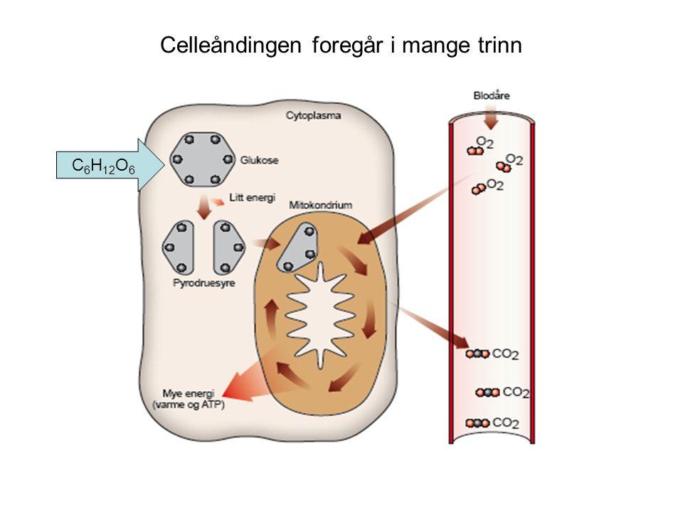 Celleåndingen foregår i mange trinn C 6 H 12 O 6
