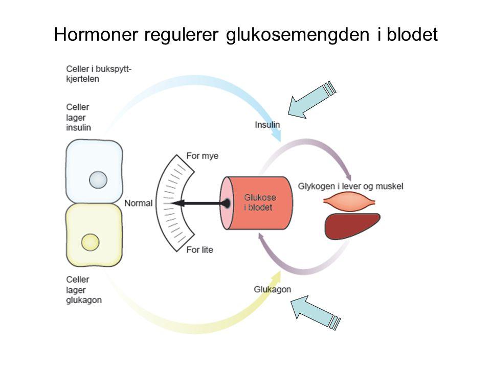 Hormoner regulerer glukosemengden i blodet