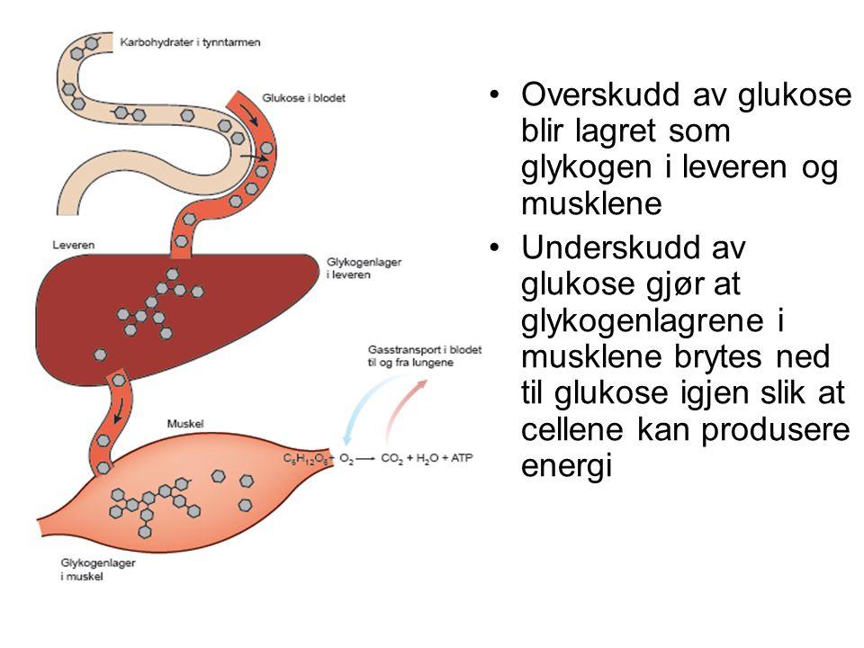 Overskudd av glukose blir lagret som glykogen i leveren og musklene Underskudd av glukose gjør at glykogenlagrene i musklene brytes ned til glukose ig