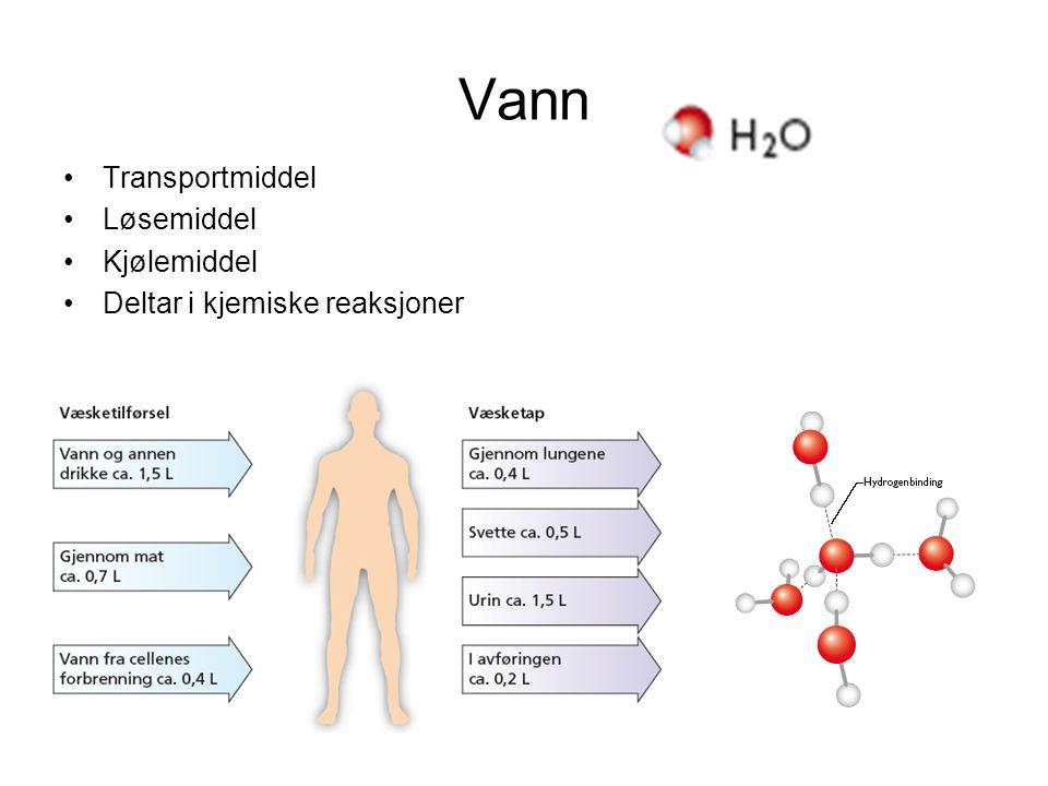 Vann Transportmiddel Løsemiddel Kjølemiddel Deltar i kjemiske reaksjoner