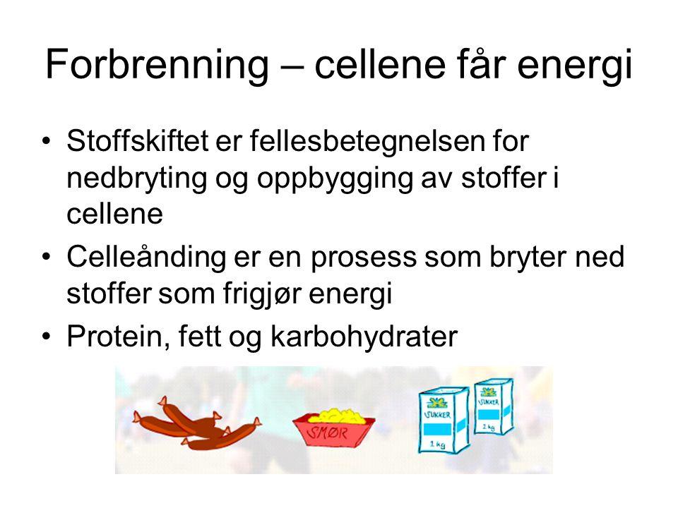 Forbrenning – cellene får energi Stoffskiftet er fellesbetegnelsen for nedbryting og oppbygging av stoffer i cellene Celleånding er en prosess som bry