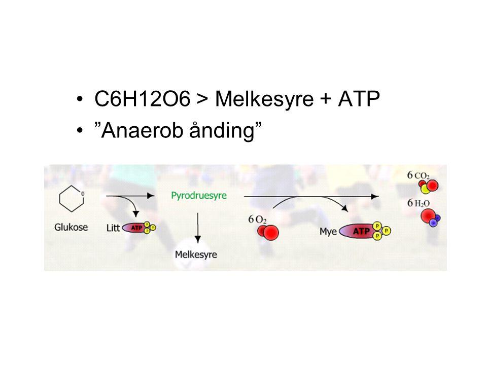 "C6H12O6 > Melkesyre + ATP ""Anaerob ånding"""