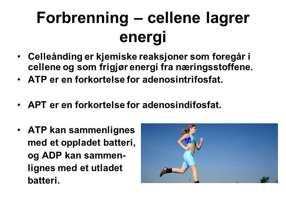 Forbrenning – cellene lagrer energi Celleånding er kjemiske reaksjoner som foregår i cellene og som frigjør energi fra næringsstoffene. ATP er en fork