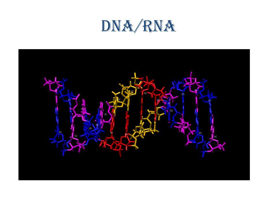 3 og 3 nitrogenbaser er kode for en aminosyre
