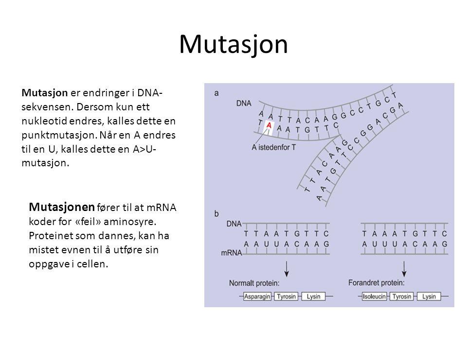 Mutasjon Mutasjon er endringer i DNA- sekvensen. Dersom kun ett nukleotid endres, kalles dette en punktmutasjon. Når en A endres til en U, kalles dett