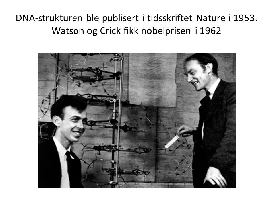 DNA-strukturen ble publisert i tidsskriftet Nature i 1953. Watson og Crick fikk nobelprisen i 1962