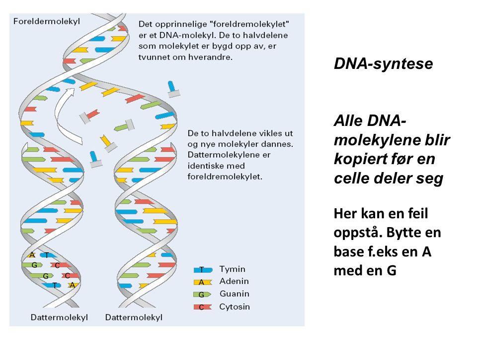 DNA-syntese Alle DNA- molekylene blir kopiert før en celle deler seg Her kan en feil oppstå. Bytte en base f.eks en A med en G