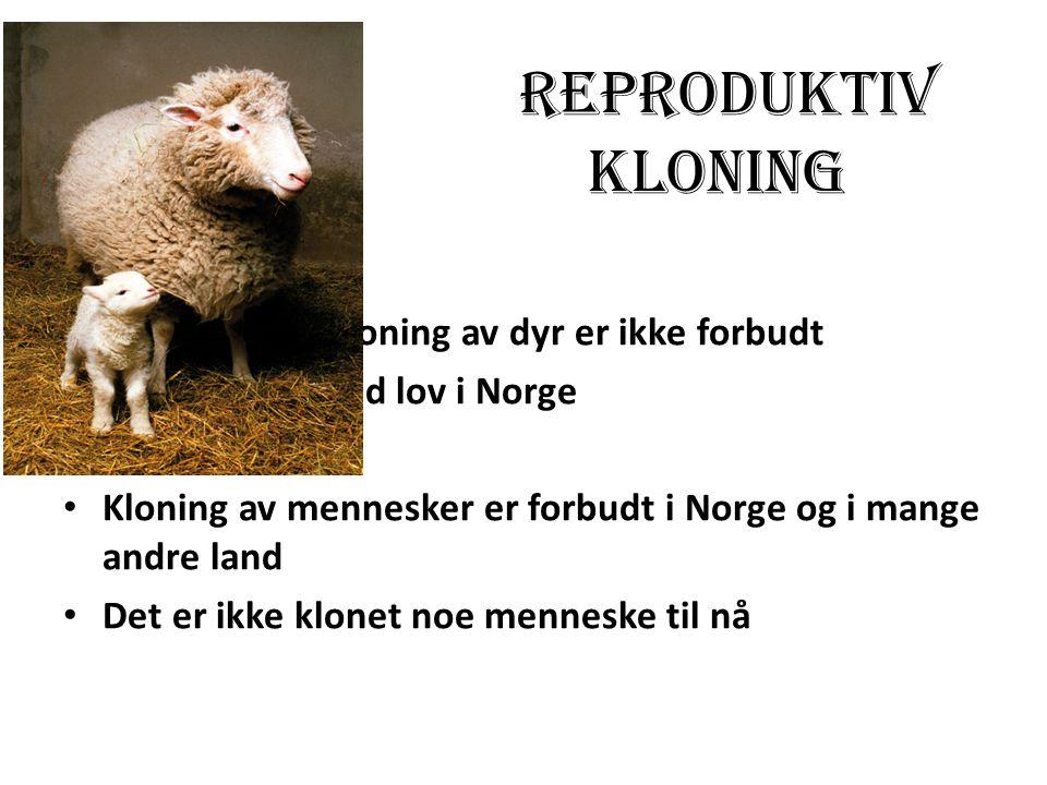 Reproduktiv kloning Kloning av dyr er ikke forbudt ved lov i Norge Kloning av mennesker er forbudt i Norge og i mange andre land Det er ikke klonet no