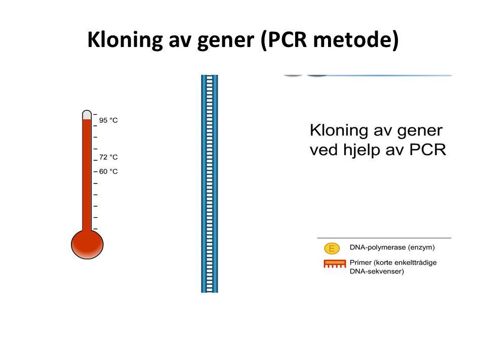 Kloning av gener (PCR metode)