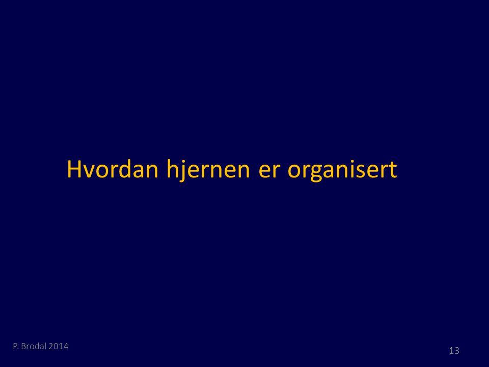 Hvordan hjernen er organisert P. Brodal 2014 13