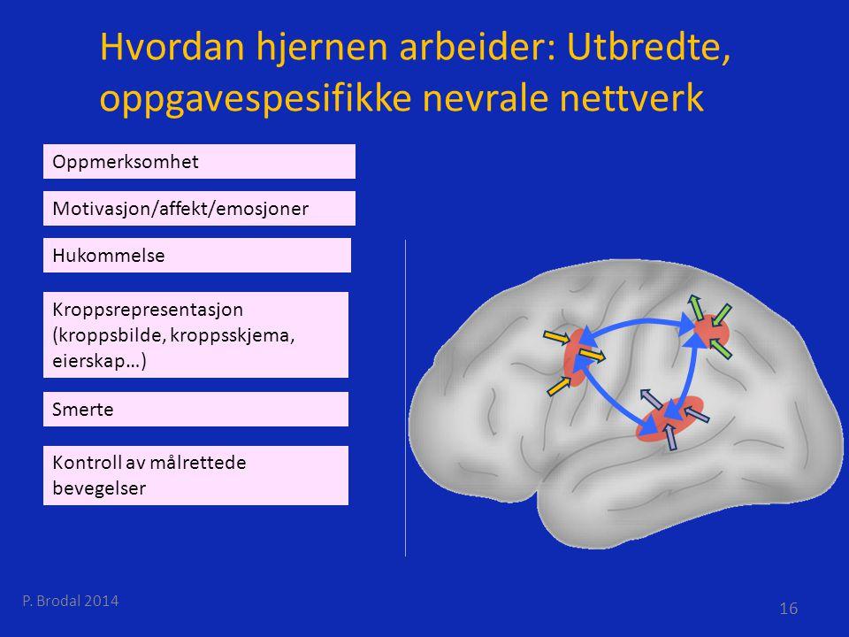 Hvordan hjernen arbeider: Utbredte, oppgavespesifikke nevrale nettverk Kontroll av målrettede bevegelser Kroppsrepresentasjon (kroppsbilde, kroppsskje