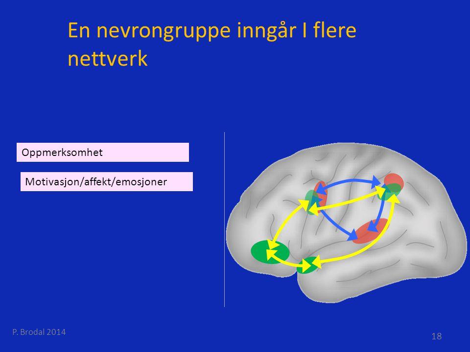 En nevrongruppe inngår I flere nettverk Motivasjon/affekt/emosjoner Oppmerksomhet P. Brodal 2014 18