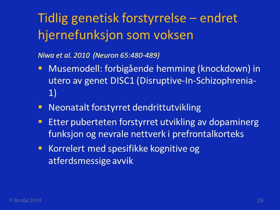 Tidlig genetisk forstyrrelse – endret hjernefunksjon som voksen Niwa et al. 2010 (Neuron 65:480-489)  Musemodell: forbigående hemming (knockdown) in