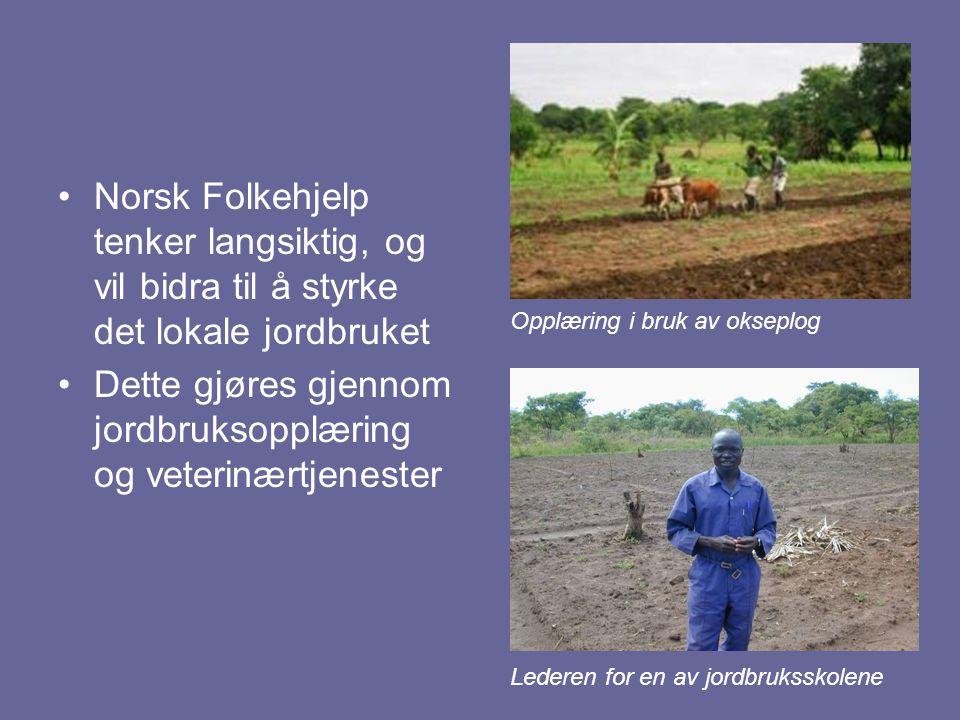 Norsk Folkehjelp tenker langsiktig, og vil bidra til å styrke det lokale jordbruket Dette gjøres gjennom jordbruksopplæring og veterinærtjenester Oppl