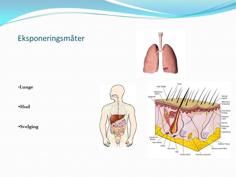 Eksponeringsmåter Lunge  Hud  Svelging