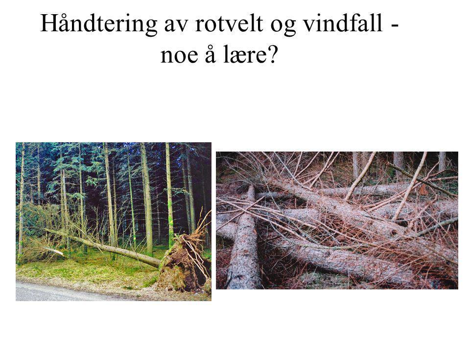 Håndtering av rotvelt og vindfall - noe å lære?