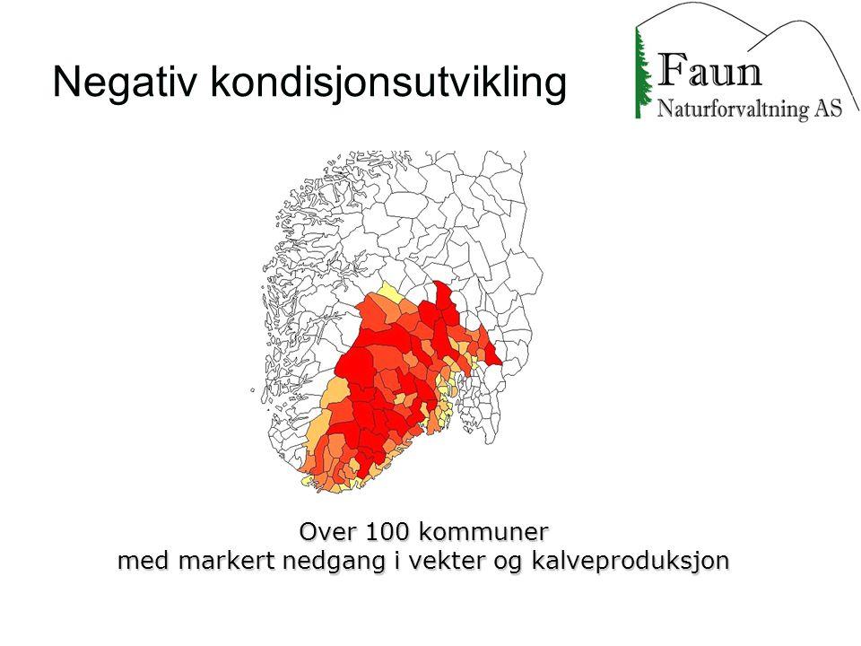 Negativ kondisjonsutvikling Over 100 kommuner med markert nedgang i vekter og kalveproduksjon