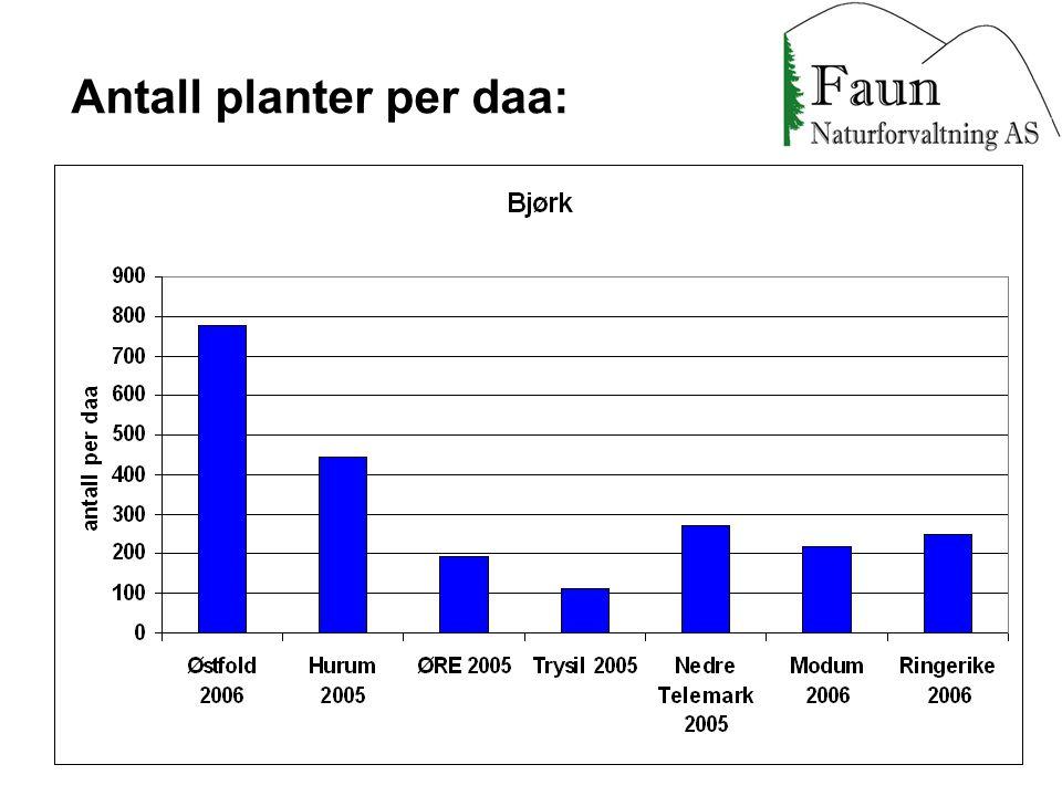 Antall planter per daa: