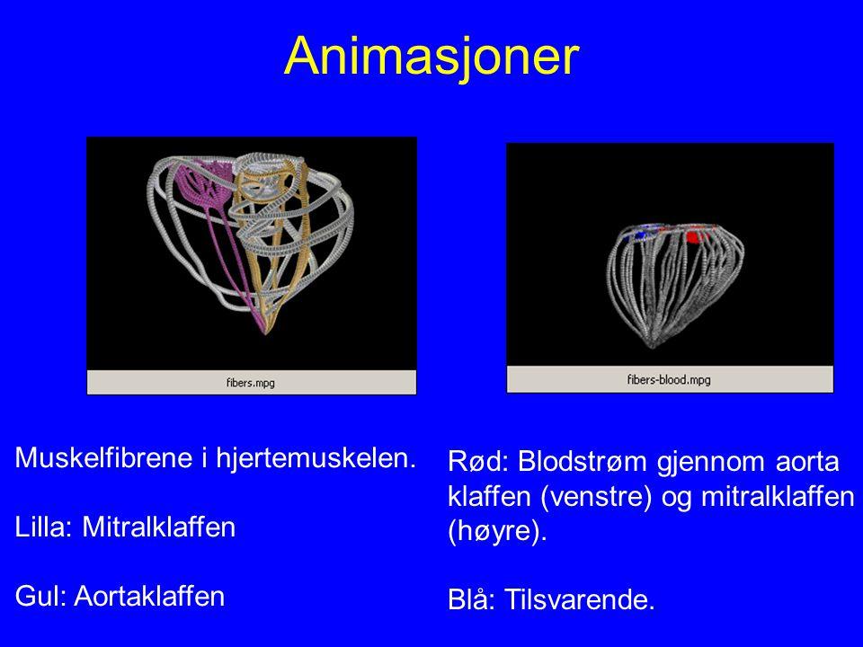 Animasjoner Rød: Blodstrøm gjennom aorta klaffen (venstre) og mitralklaffen (høyre). Blå: Tilsvarende. Muskelfibrene i hjertemuskelen. Lilla: Mitralkl