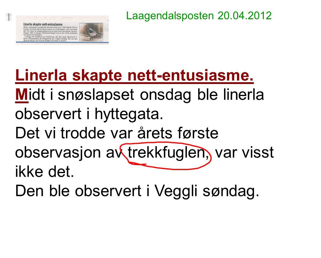 Laagendalsposten 20.04.2012 Linerla skapte nett-entusiasme. Midt i snøslapset onsdag ble linerla observert i hyttegata. Det vi trodde var årets første