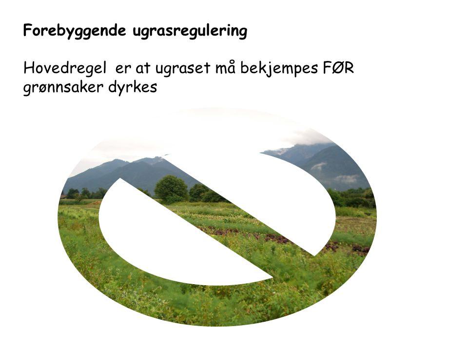 Forebyggende ugrasregulering Hovedregel er at ugraset må bekjempes FØR grønnsaker dyrkes
