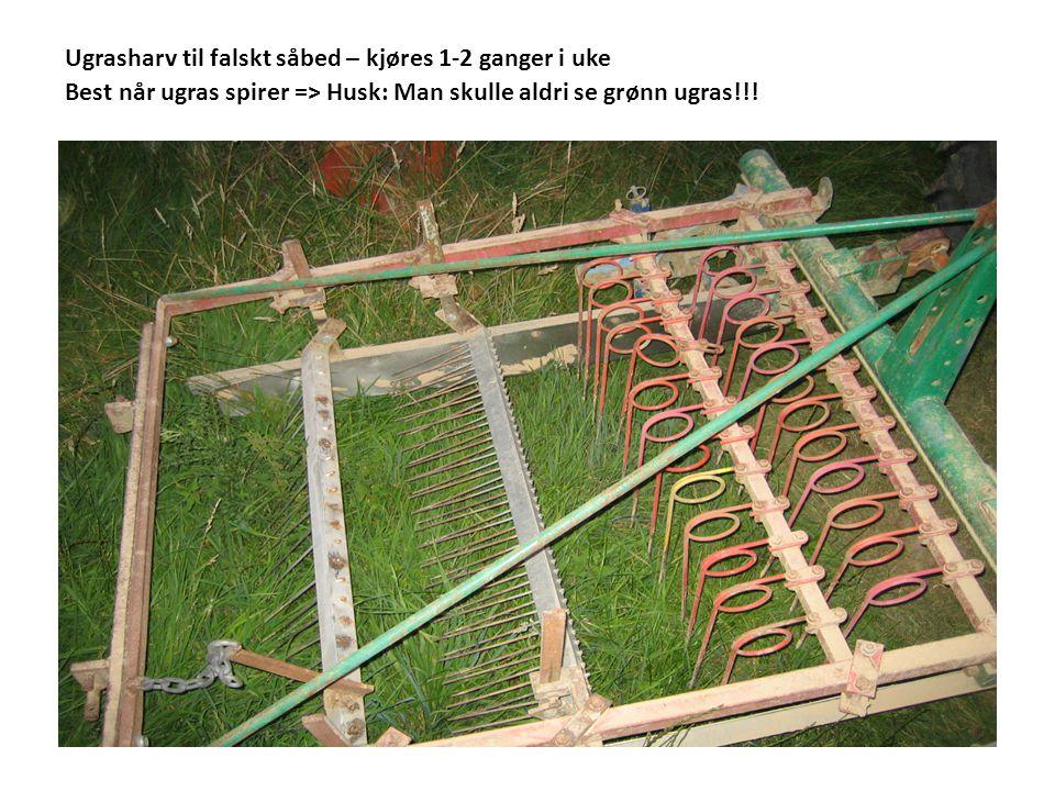 Ugrasharv til falskt såbed – kjøres 1-2 ganger i uke Best når ugras spirer => Husk: Man skulle aldri se grønn ugras!!!