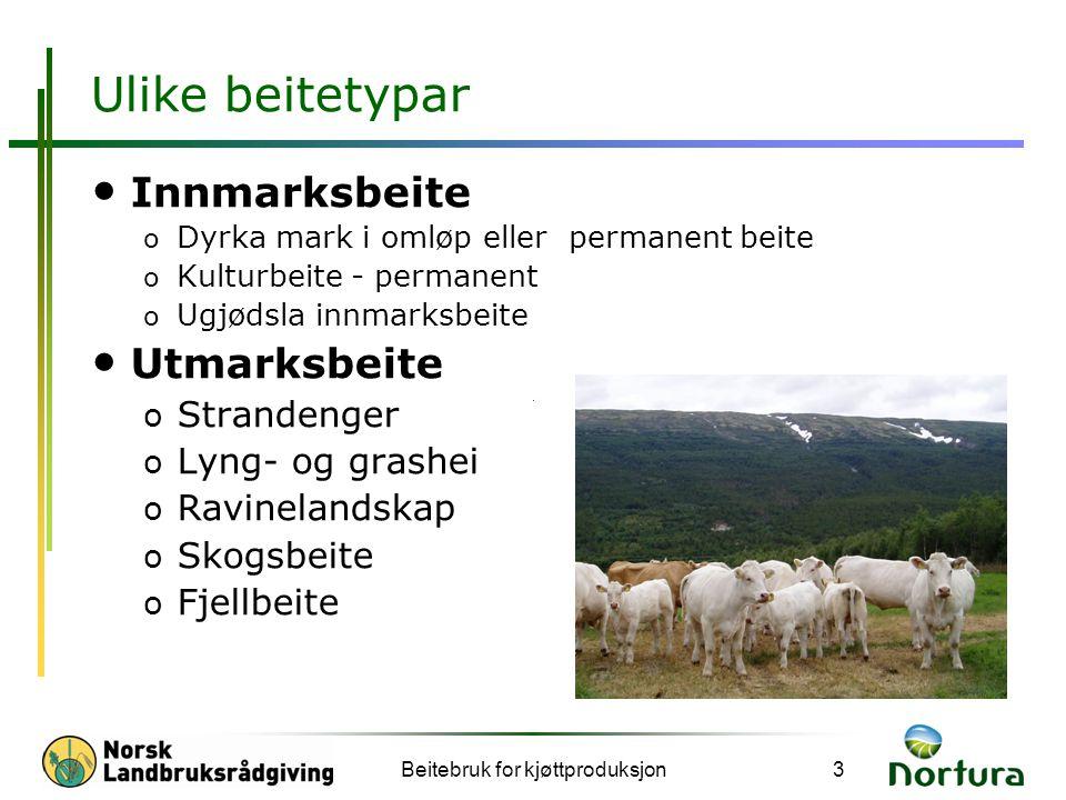 Beitebruk for kjøttproduksjon14 Beite og mjølk er ofte ikkje nok til ammekalv.