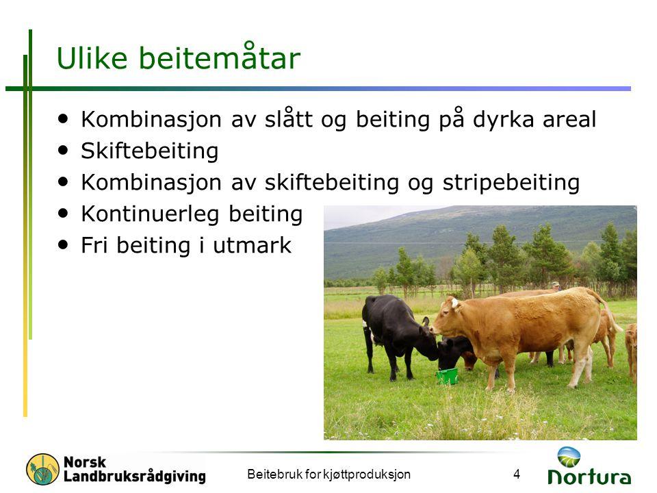 Beitebruk for kjøttproduksjon5 Ulike beitesystem Kontinuerleg beite Stripebeite med bakgjerde Skiftebeite