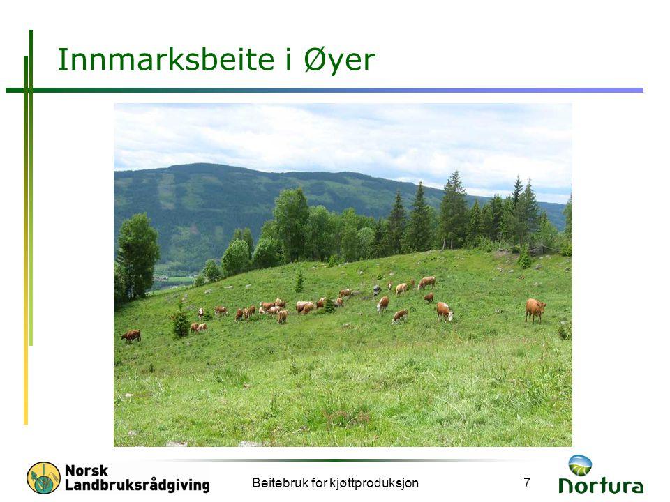 Beitebruk for kjøttproduksjon18 Konklusjonar Sett opp mål for tilvekst hos dyra Lag ein beitebruksplan gjennom sesongen Friske dyr veks etter den næringa dei får.