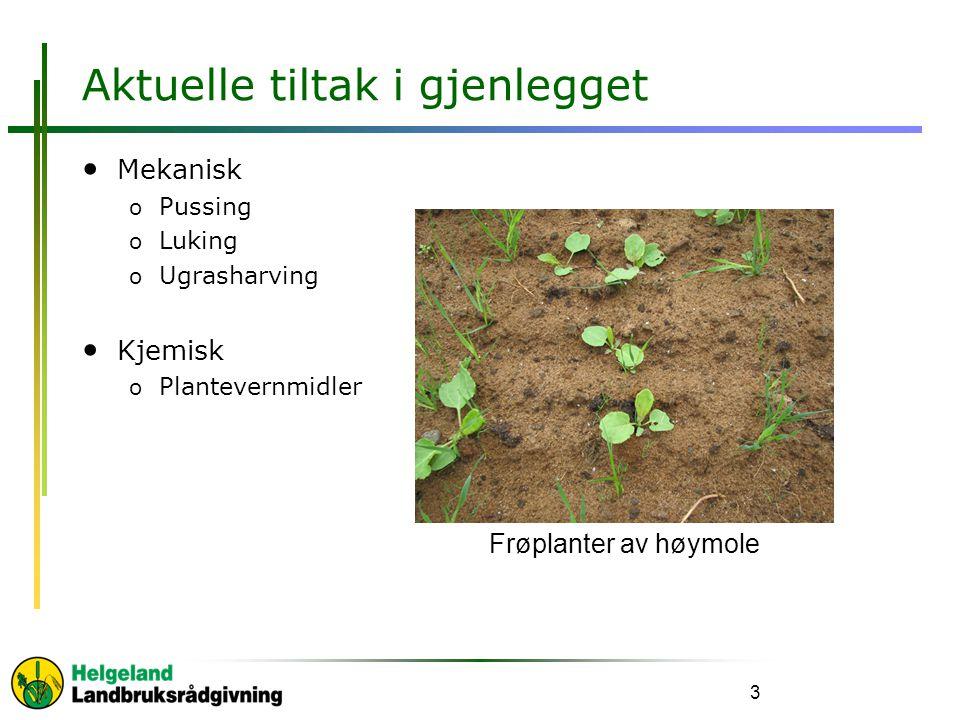 Aktuelle tiltak i gjenlegget Mekanisk o Pussing o Luking o Ugrasharving Kjemisk o Plantevernmidler 3 Frøplanter av høymole