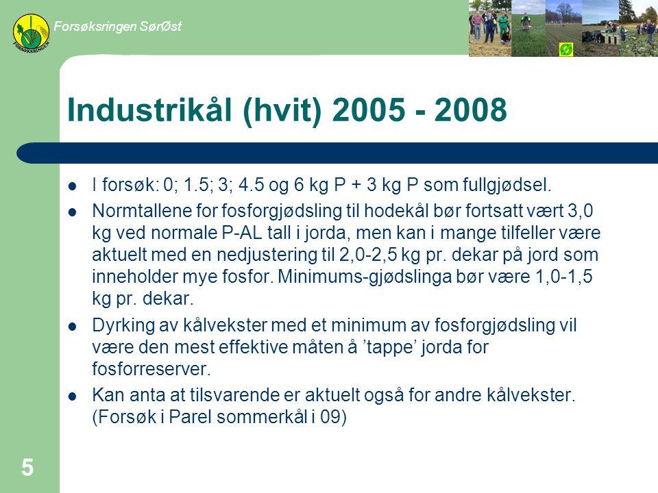 Gulrot 2008 Resultatet fra SørØst avviker i forhold til to andre felt der det ikke var avlingsutslag for å gi mer enn 1,5 kg P/daa (P-AL?) Uten fosfortilføring har P-Al tallene gått ned ca.