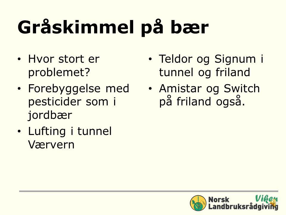 Skudd sykdommer Gråskimmel, spesielt i tunnel Skuddsyke Husk Flekkskurv når vi får nye sorter!Flekkskurv Forebyggelse ikke helbredelse Husk lufting i
