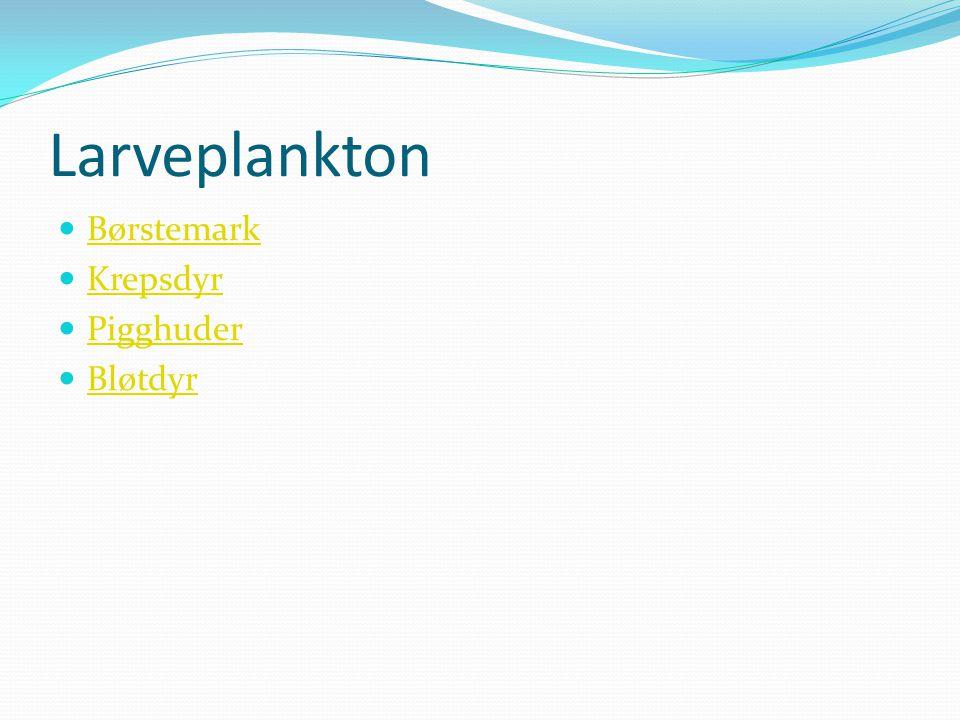 Larveplankton Børstemark Krepsdyr Pigghuder Bløtdyr