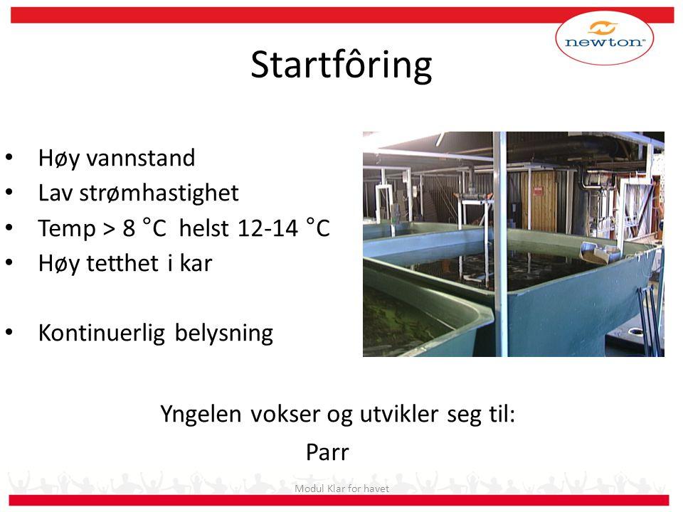 Startfôring Høy vannstand Lav strømhastighet Temp > 8 °C helst 12-14 °C Høy tetthet i kar Kontinuerlig belysning Modul Klar for havet Yngelen vokser o