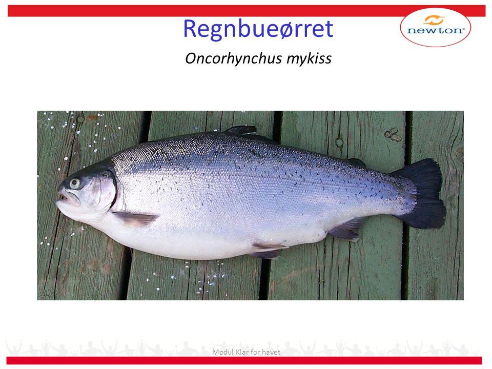 Stryking av hunner Bedøving 1 l rogn ~ 5000 egg Rogn må ikke komme i kontakt med vann Modul Klar for havet