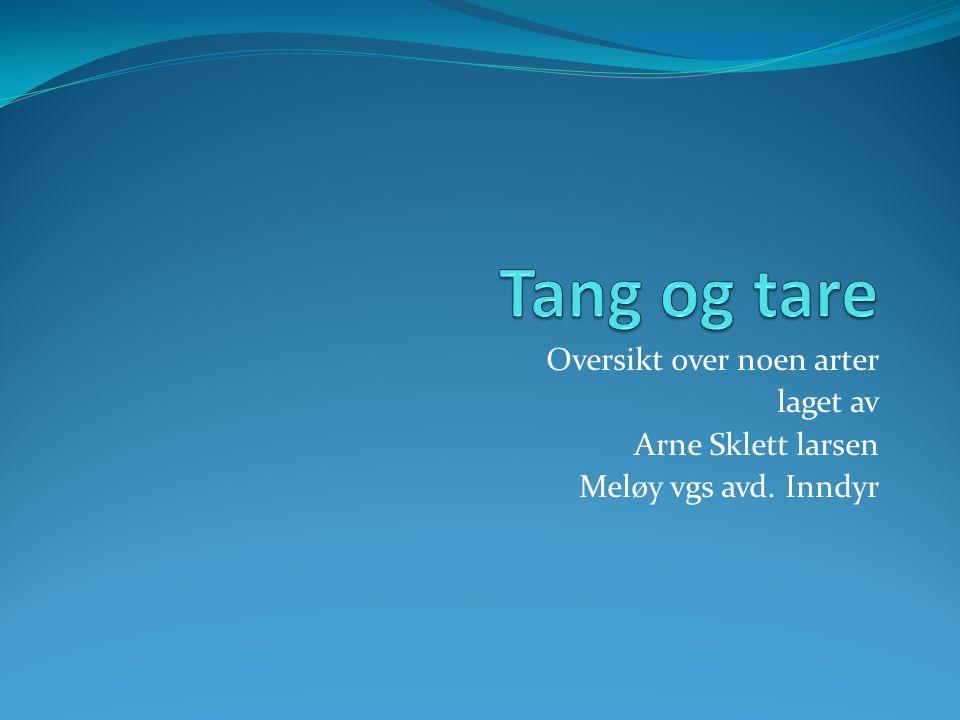 Oversikt over noen arter laget av Arne Sklett larsen Meløy vgs avd. Inndyr