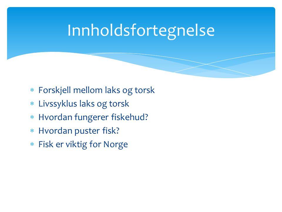  Forskjell mellom laks og torsk  Livssyklus laks og torsk  Hvordan fungerer fiskehud?  Hvordan puster fisk?  Fisk er viktig for Norge Innholdsfor