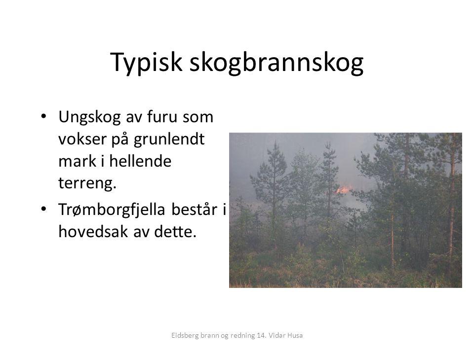 Eidsberg brann og redning 14. Vidar Husa Typisk skogbrannskog Ungskog av furu som vokser på grunlendt mark i hellende terreng. Trømborgfjella består i