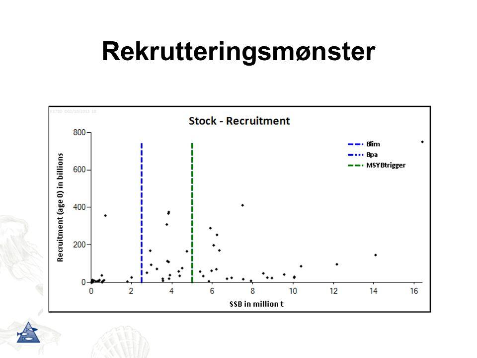 Rekrutteringsmønster