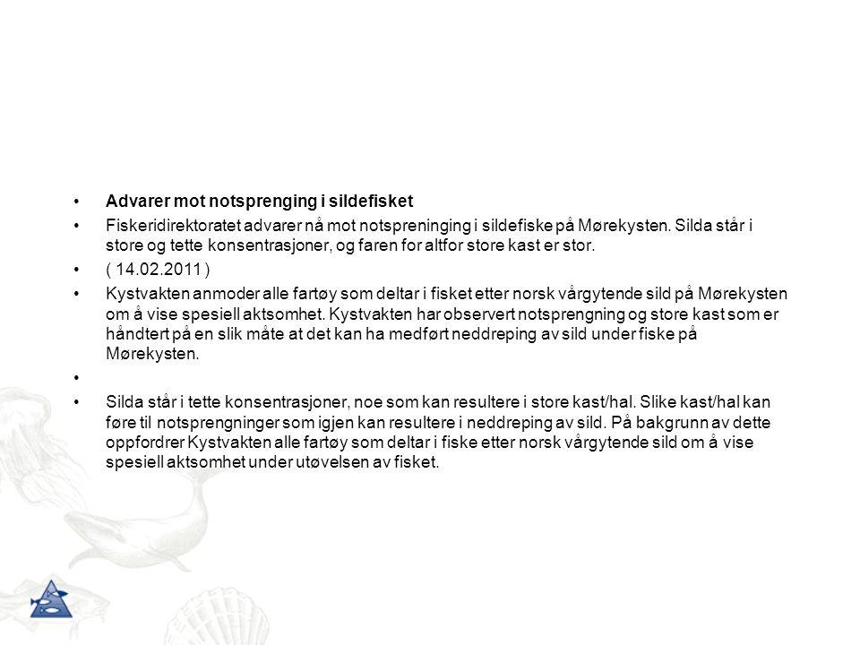 Advarer mot notsprenging i sildefisket Fiskeridirektoratet advarer nå mot notspreninging i sildefiske på Mørekysten.