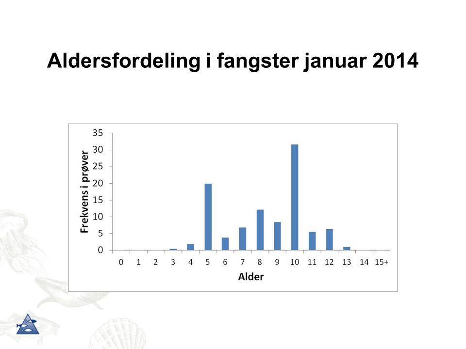 Aldersfordeling i fangster januar 2014