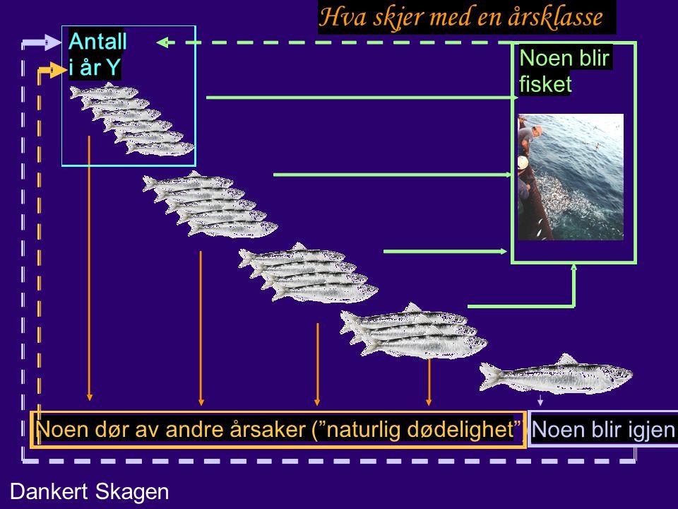 Behov for forbedring Usikkerhet i fangstdata –Urapporterte fangster.