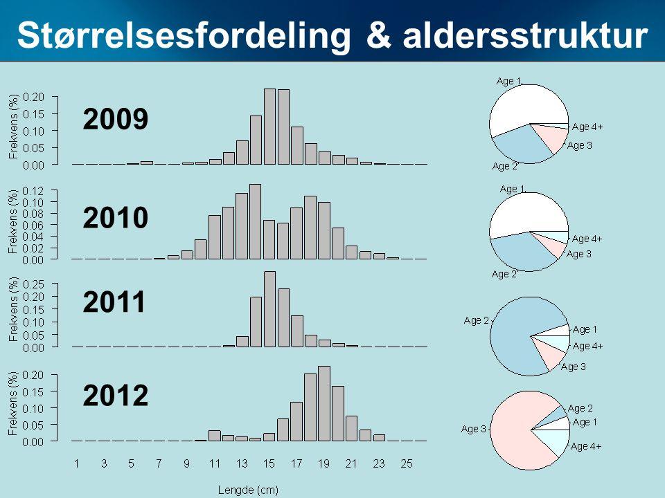 Størrelsesfordeling & aldersstruktur 2009 2010 2011 2012