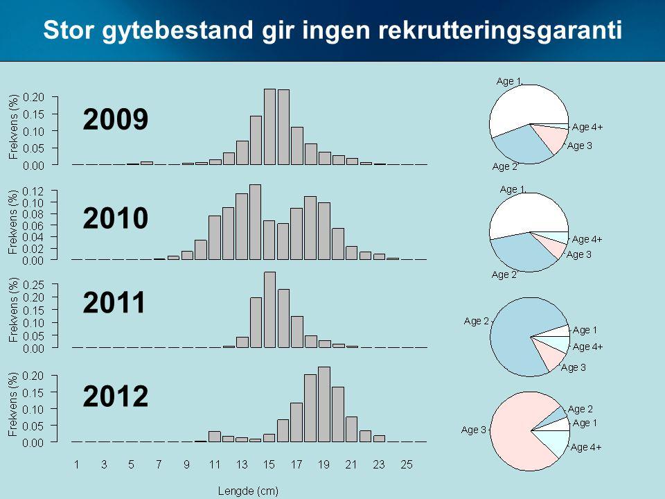 Stor gytebestand gir ingen rekrutteringsgaranti 2009 2010 2011 2012