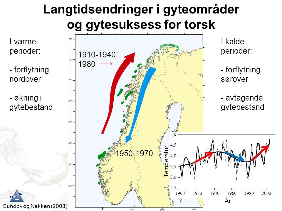 Langtidsendringer i gyteområder og gytesuksess for torsk Sundby og Nakken (2008) I kalde perioder: - forflytning sørover - avtagende gytebestand 1950-