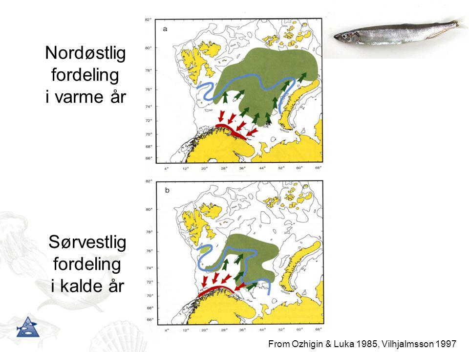 Nordøstlig fordeling i varme år Sørvestlig fordeling i kalde år From Ozhigin & Luka 1985, Vilhjalmsson 1997