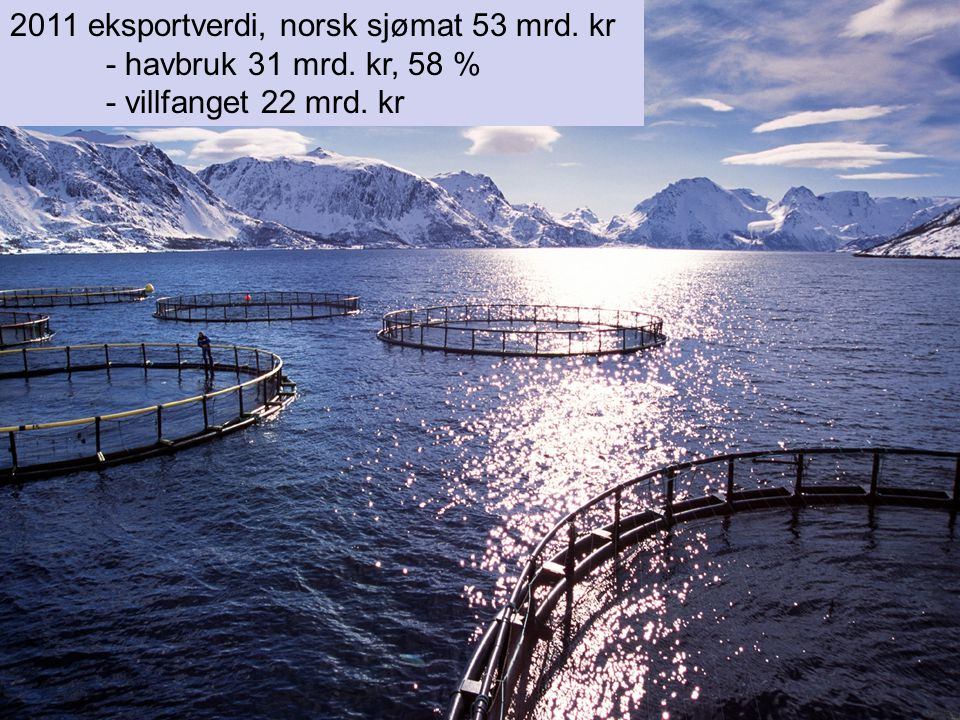 2011 eksportverdi, norsk sjømat 53 mrd. kr - havbruk 31 mrd. kr, 58 % - villfanget 22 mrd. kr