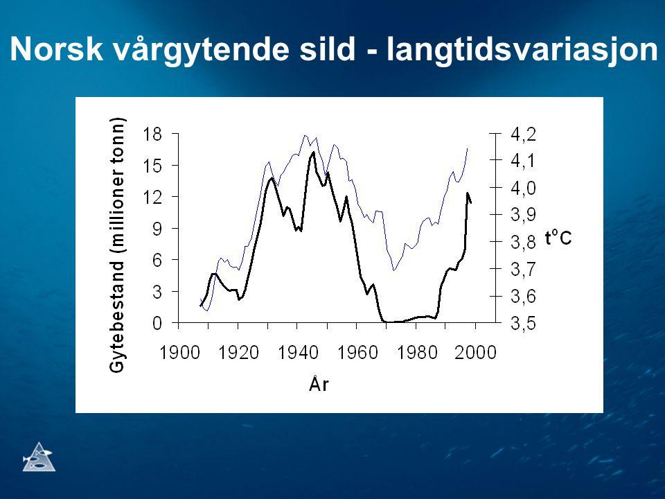 Norsk vårgytende sild - langtidsvariasjon