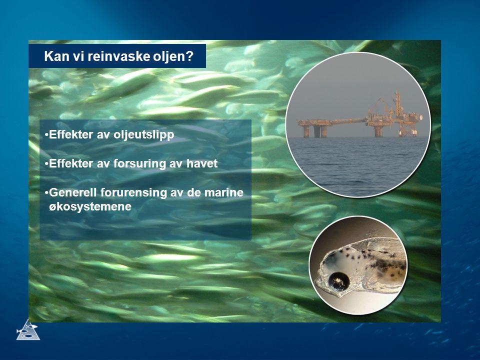Kan vi reinvaske oljen? Effekter av oljeutslipp Effekter av forsuring av havet Generell forurensing av de marine økosystemene